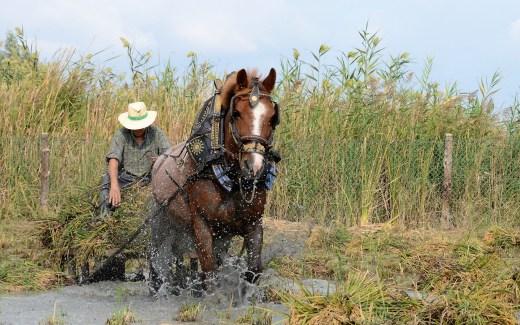 rijstpluk ebro delta