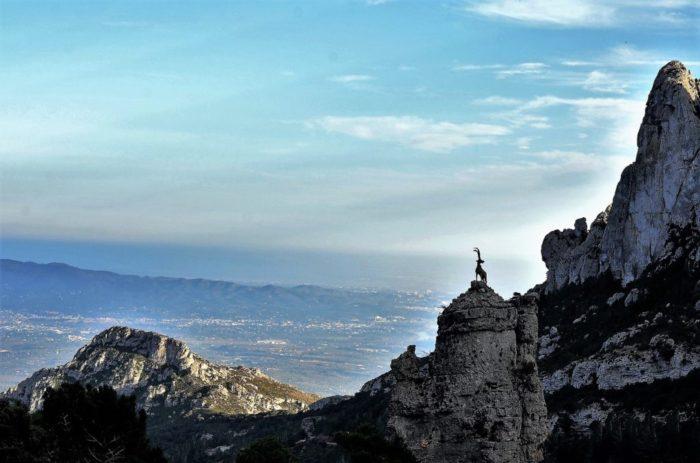 De steenbok is het beeldmerk van Els Ports