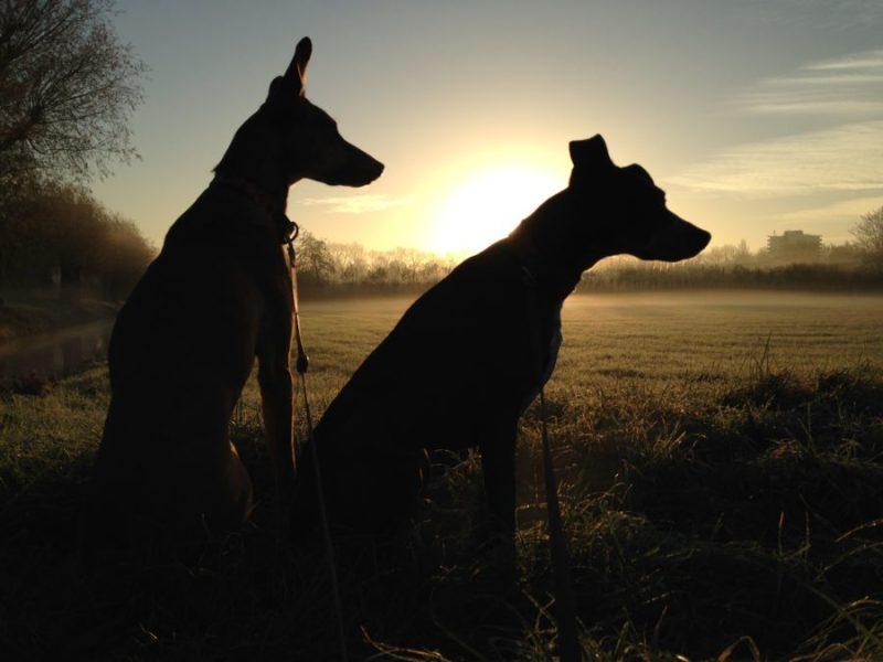 Rust zacht mandgenoten en partners in crime | verdriet om honden