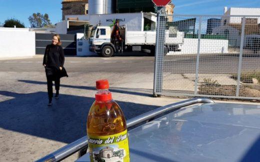 Olijvenpluk een kijkje op een olijfoliemolen