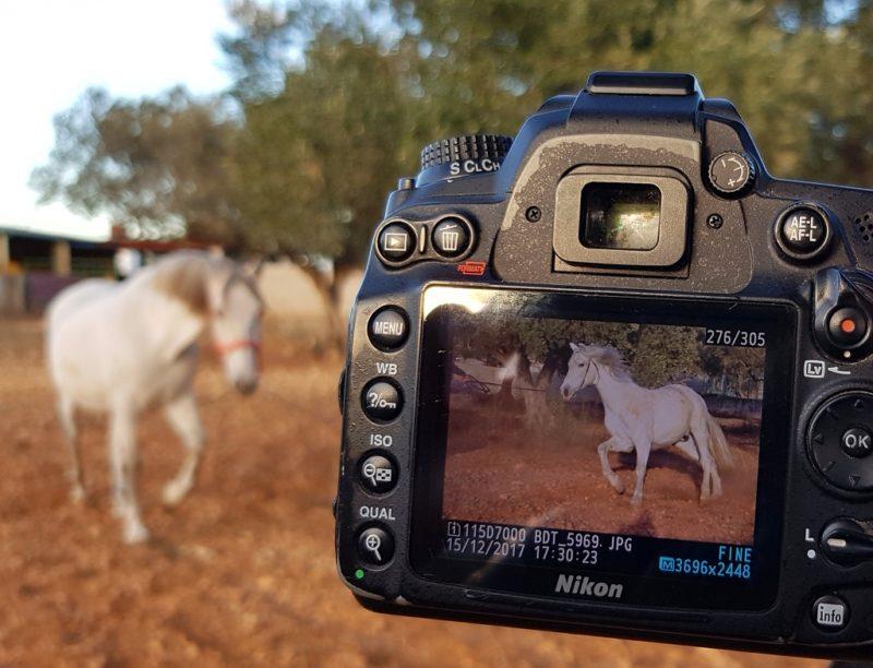 Emigratie Fotodagboek #18 dec. 2017 Overleven in Spanje