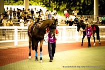 These horses were paraded for the officials, the public and the horses owners prior to the race.
