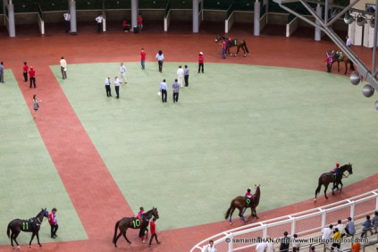 Mounting Enclosure or Parade Ring - A place where the horses are paraded in numerical order prior to each race and jockeys are issued with instructions from trainers and mount their horses.