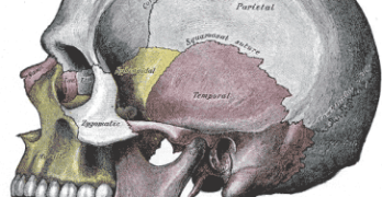 Anatomy of Upper Cervical Spine