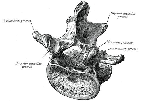 pars interarticularis