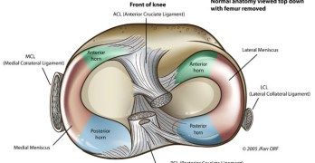 Meniscus Anatomy, Function and Significance