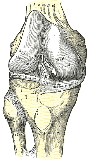 superior tibifibular joint