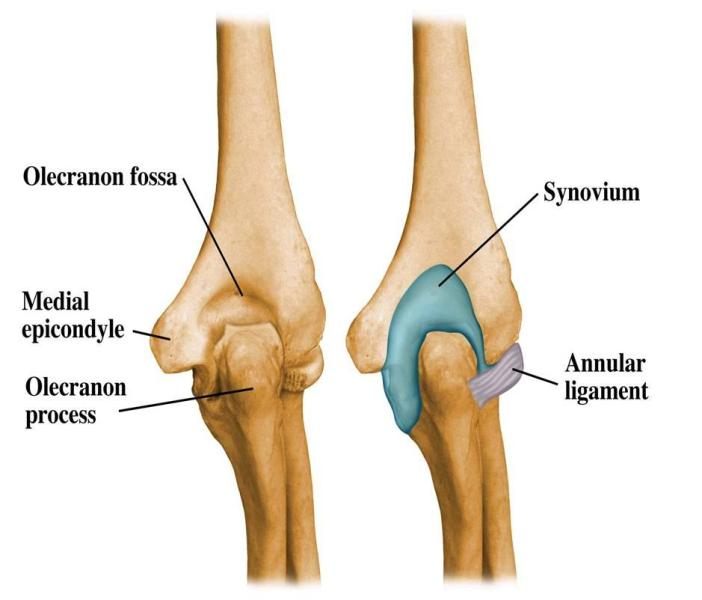 Elbow Pain Causes and Treatment | Bone and Spine
