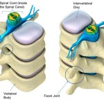Vertebral Canal Anatomy and Contents