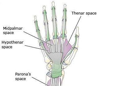Various spaces of hand