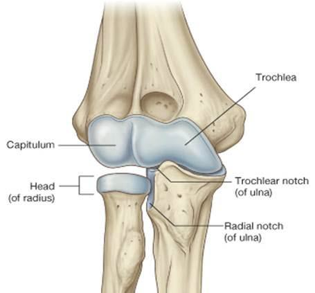 Radial Head Fractures | Bone and Spine