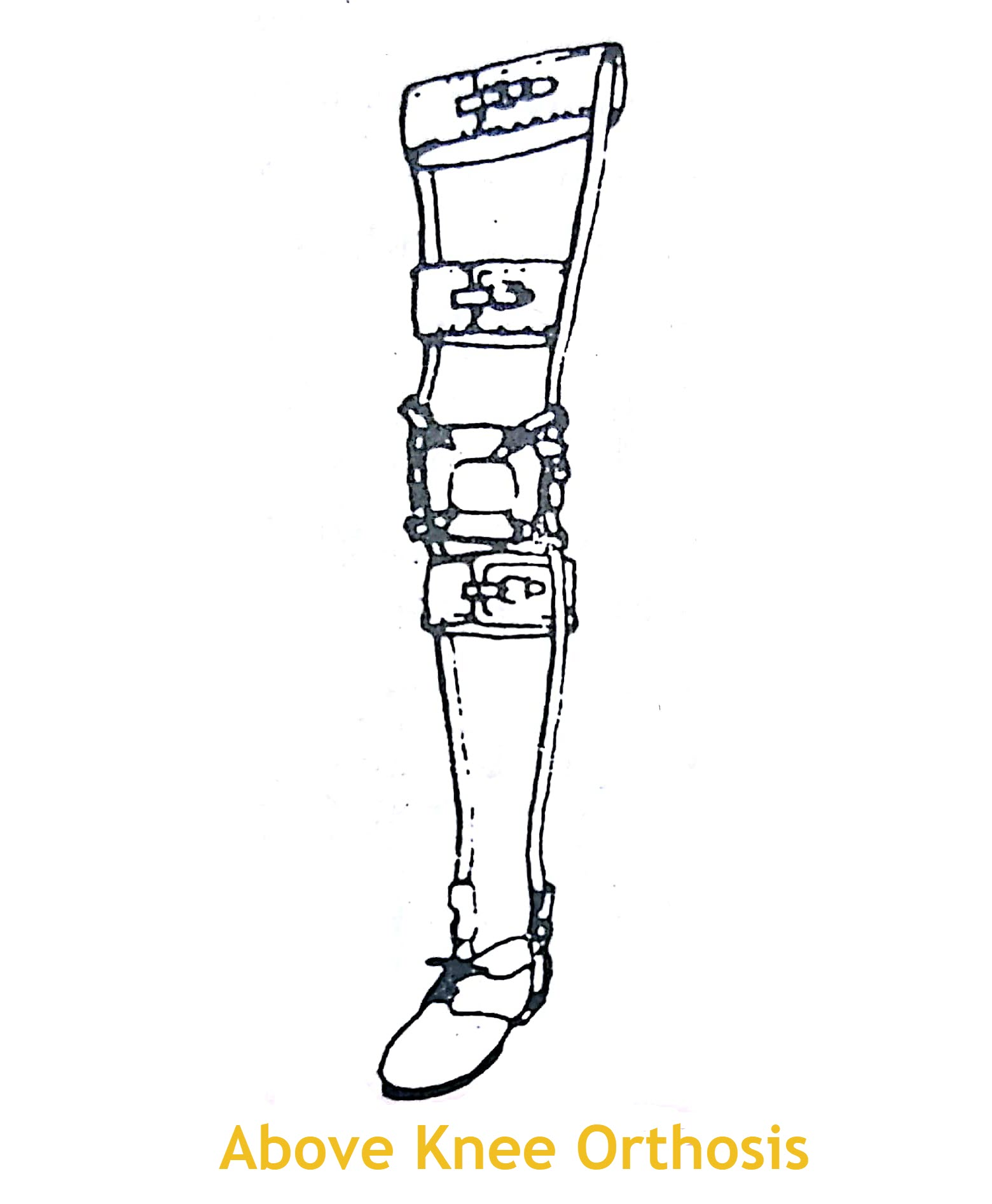 Lower Limb Orthoses Components And Functions