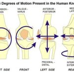 Normal Biomechanics of Knee and Movements