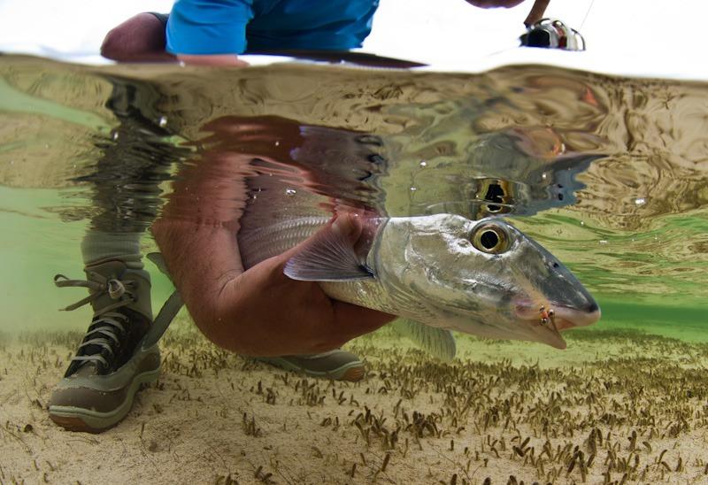 Bonefish-Photograph-1