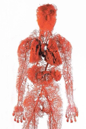 Map of the intricate circulatory system