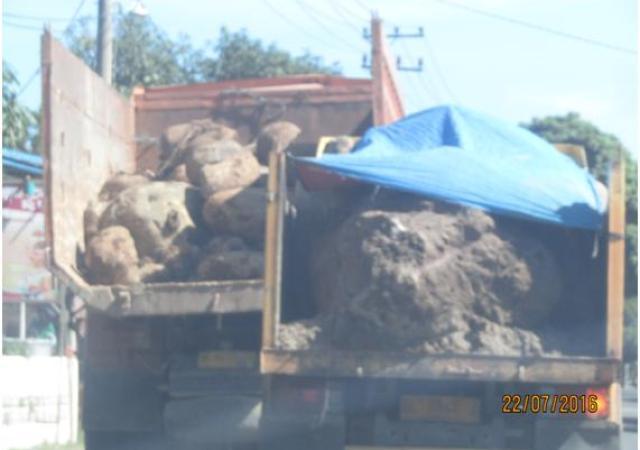 Penjarahan Batu Gajah tak Tekendali