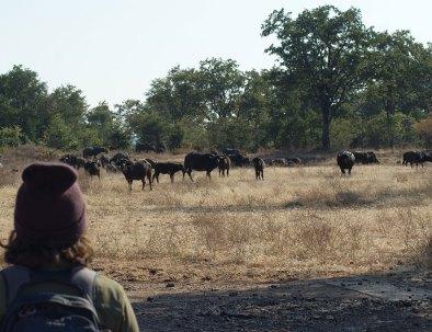 Bongwe Walking Safaris