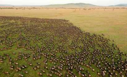 Liuwa Plains with Bongwe Safaris