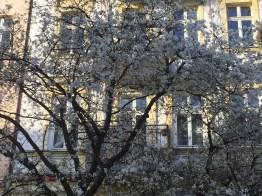 blossom tree, Kulturbrauerei, sunny day, spring, Berlin, fire, Easter