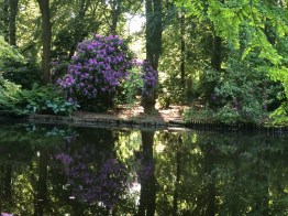 Rhododendrons, Berlin, parc, summer, water, boat, grass, picnic, holiday, vacation, flowers, sun, trees, rabbits, iPhone,Germany