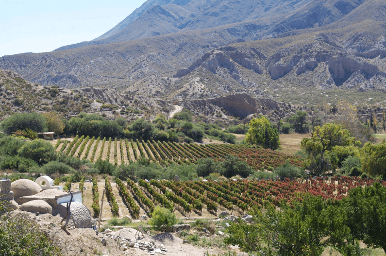 Tasting three wines from your Argentine collection with Julien Miquel