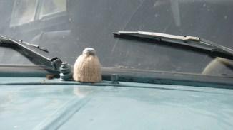 globe-t-bonnet-voyageur-travelling-winter-hat-cuba-habana-pinardelrio2B