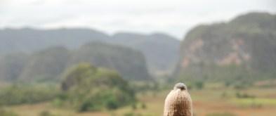 globe-t-bonnet-voyageur-travelling-winter-hat-cuba-Vinales1B