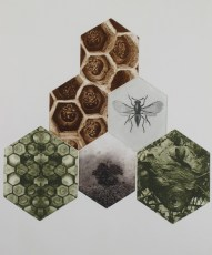 Hive, photo polymer plates