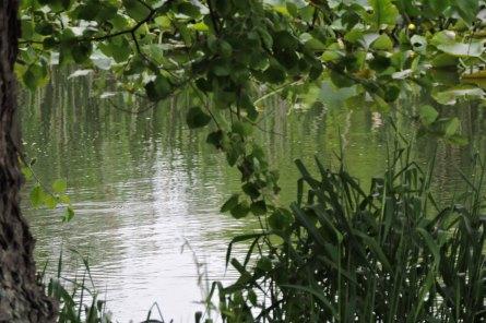 dscn6441 Lake Bruce - Copy
