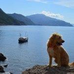 Bonnie Lass Maggie der Hund