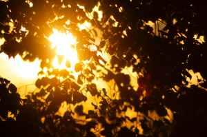 sunset dark sun festival