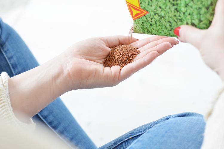 Sprossen züchten Tipps