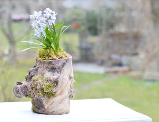 baumstamm-pflanze-loch