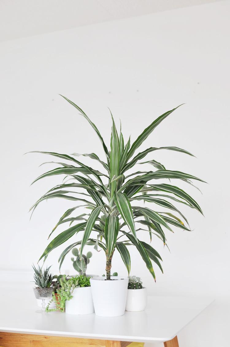 Die besten Zimmerpflanzen fuer die Wohnung