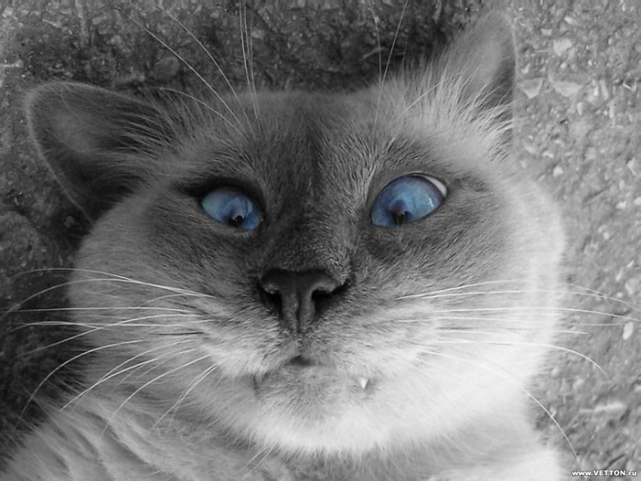 LOLcat, La déchéance du chat