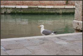 2011 Venedig Schweiz 51