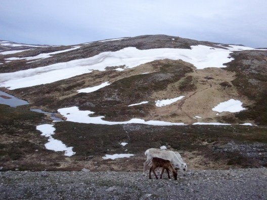 Nordkapp-Hammerfest-4