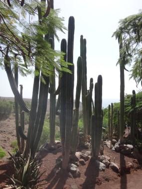 Fuerteventura 2017-28