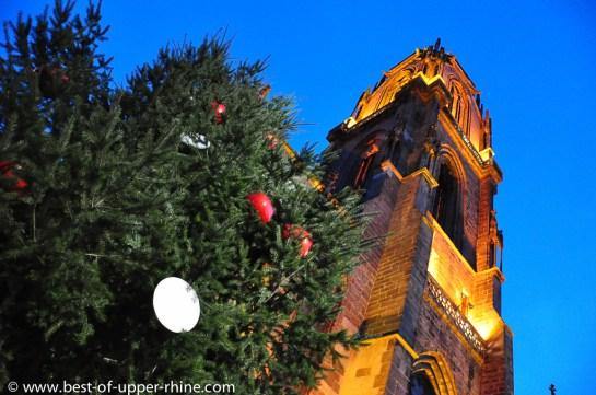 Grand sapin de Noël sur le parvis de l'Eglise St-Georges à Sélestat