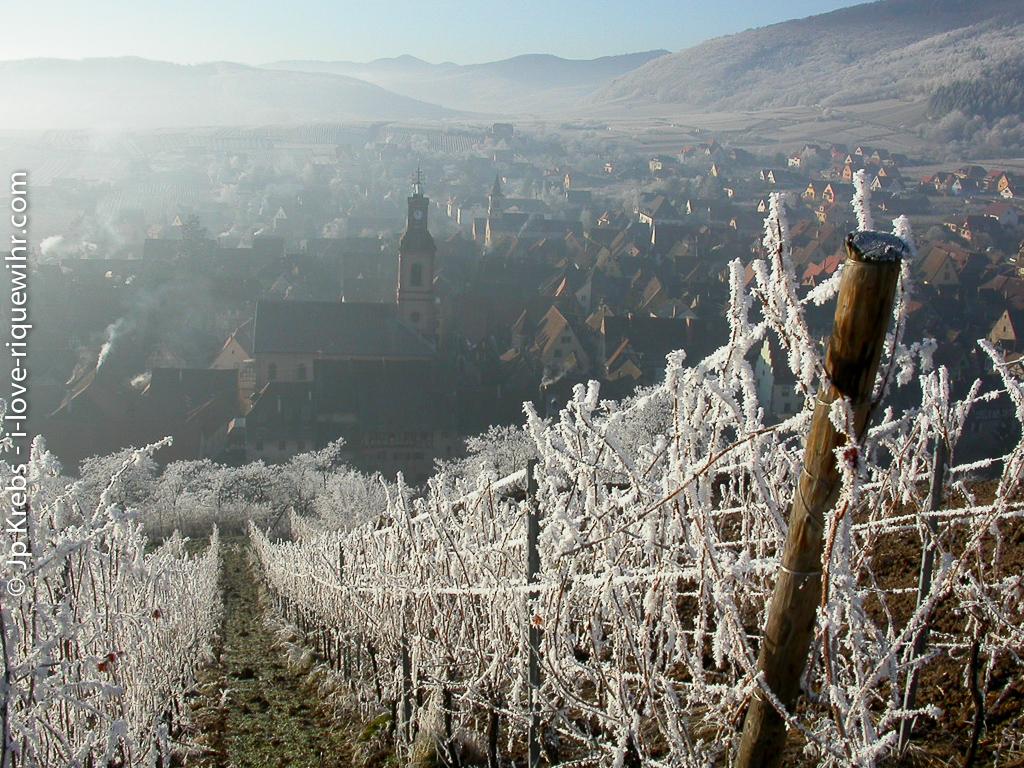 Le vignoble du Schoenenbourg à Riquewihr en hiver.