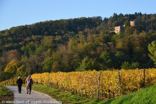 Château de Kintzheim (Volerie des Aigles) en Alsace. Promenade d'automne, fin octobre.