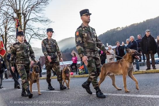 Les chiens malinois de l'armée défilent fièrement…