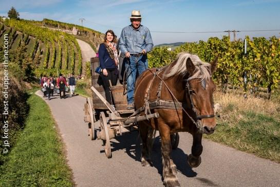Avec Michel et sa jument Ophasia, en route pour la vigne !