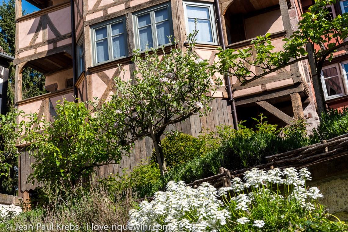 Le jardin des Gites de charme a Riquewihr