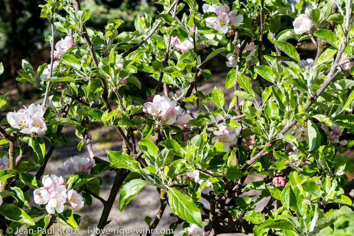 Les fleurs des Gites de charme a Riquewihr