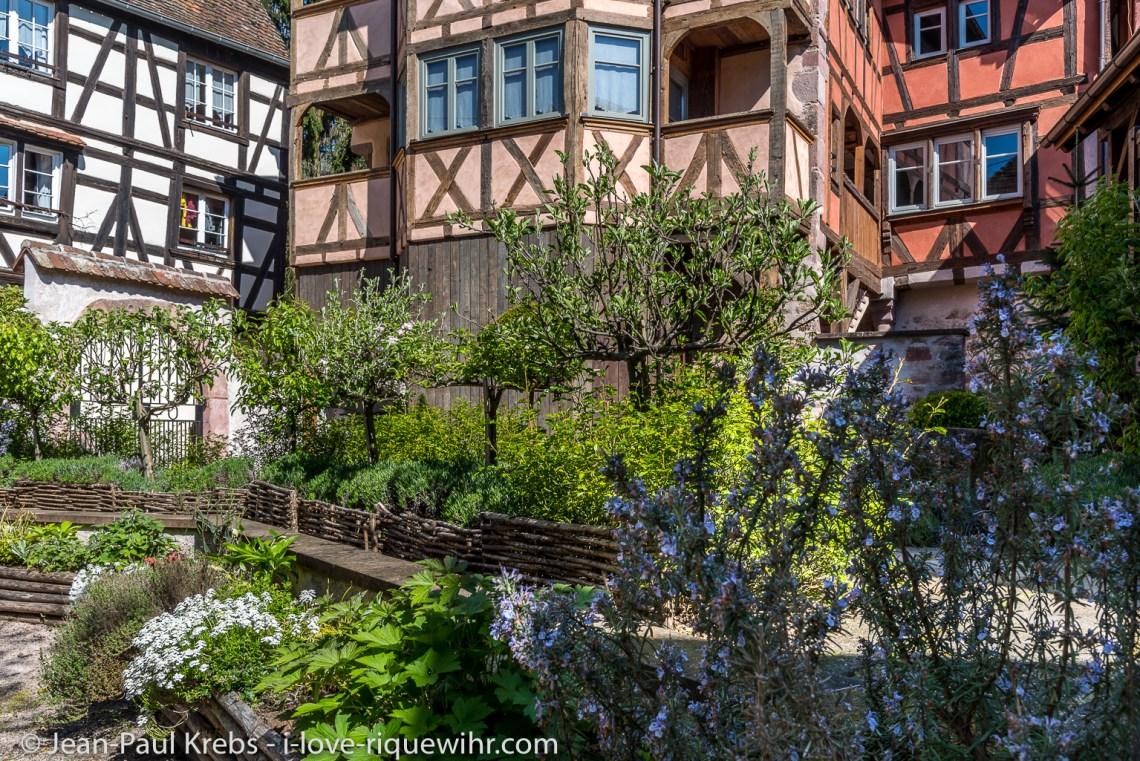 Arbres et fleurs de l'entrée des Gites de charme a Riquewihr