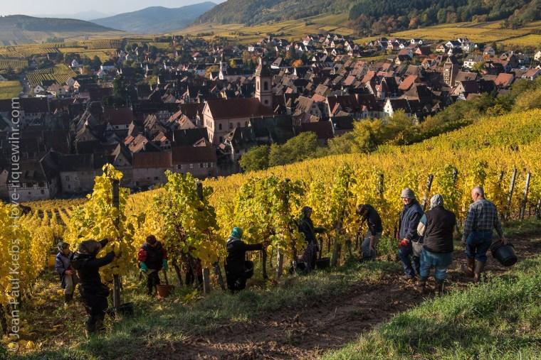 Riquewihr, vendanges sur le grand cru Schoenenbourg