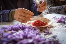 Préparation du safran