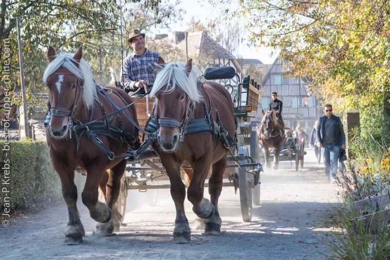 Chevaux et carriole à l'écomusée d'Alsace