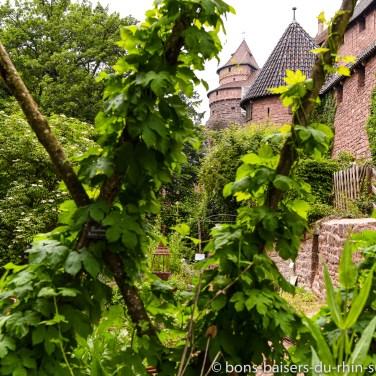 Délicieux Jardin au château du Haut-Koenigsbourg
